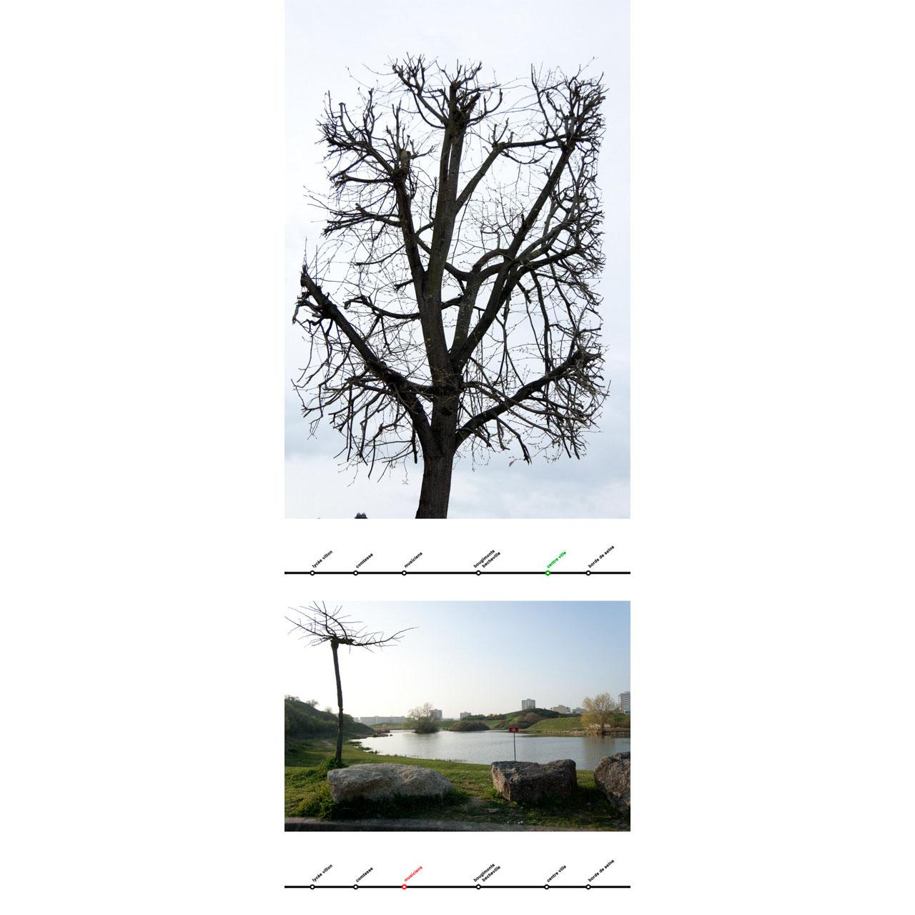 >>> arbres